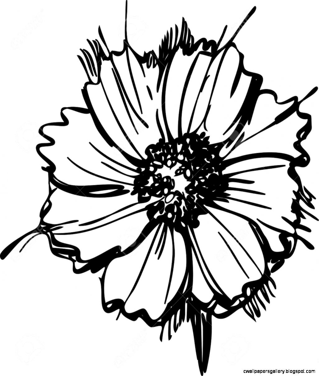 daisy flower cartoon pictures daisy line drawing at getdrawings free download daisy flower cartoon pictures