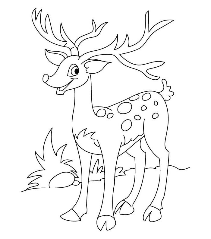 deer coloring sheet for education new animal deer coloring pages deer sheet coloring