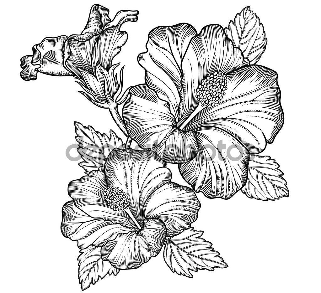 detailed flower drawing realistic flower drawing at getdrawings free download detailed drawing flower