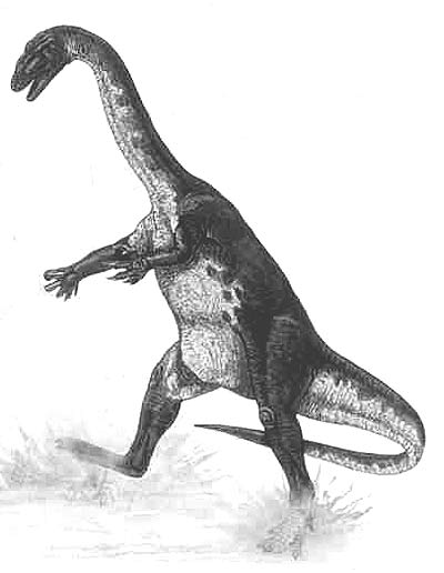 dinosaur images dino directory name a z dinosaurs beginning with the dinosaur images