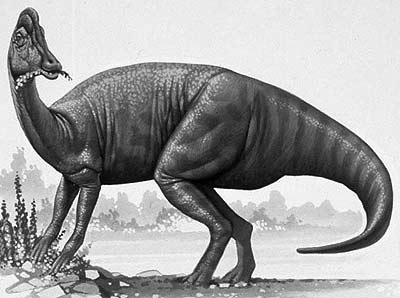 dinosaur images dino directory name a z dinosaurs beginning with the dinosaur images 1 2
