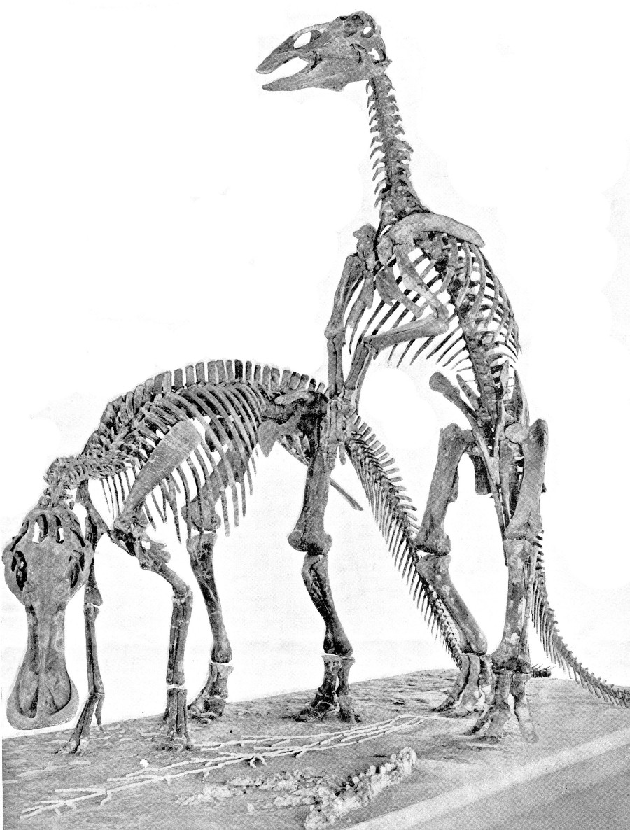 dinosaur images trachodon pictures facts the dinosaur database dinosaur images