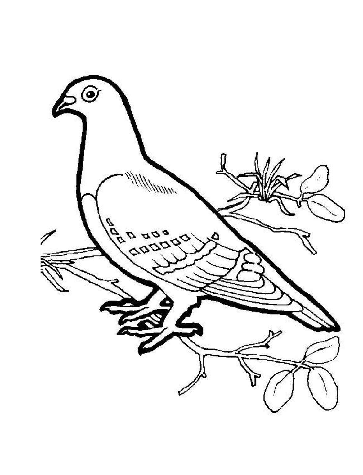 doves coloring pages dove coloring page pages doves coloring