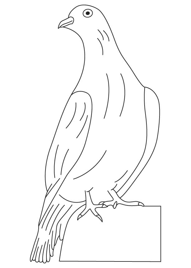 doves coloring pages dove coloring sheet turtle diary pages doves coloring