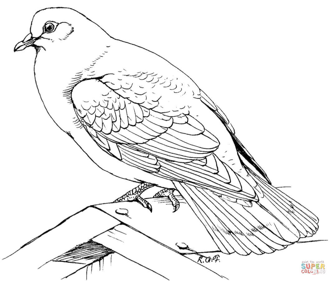 doves coloring pages dove colouring page coloring pages doves