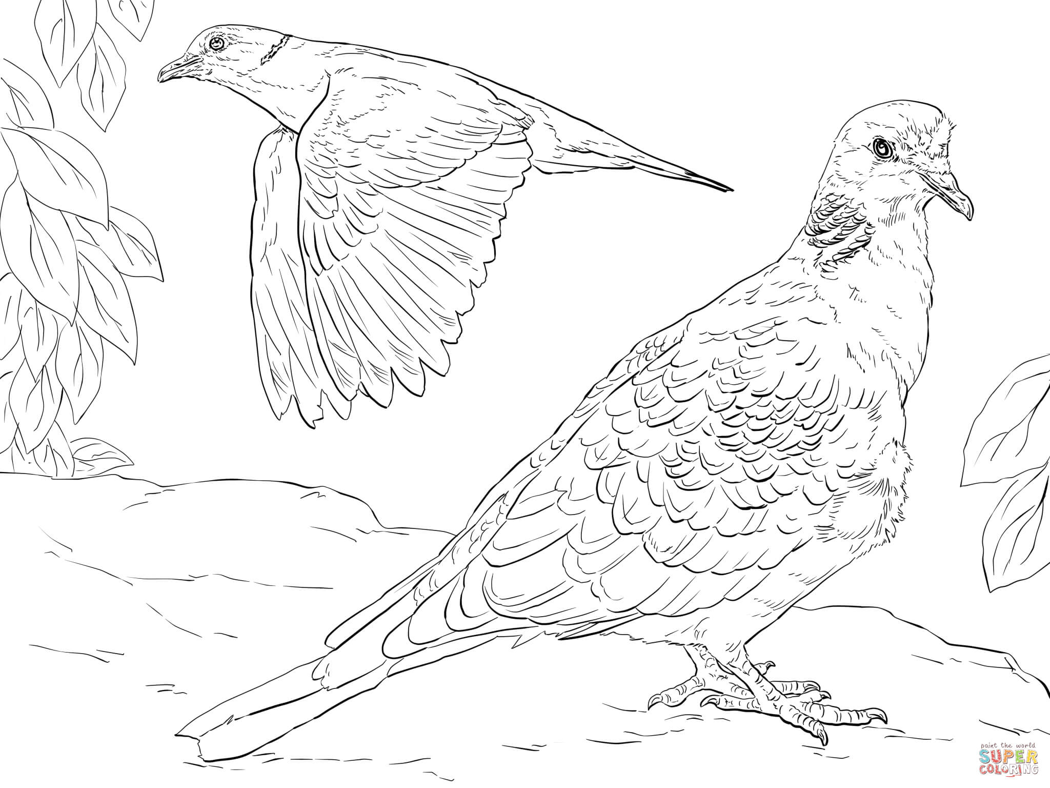 doves coloring pages turtle dove coloring download turtle dove coloring for pages coloring doves
