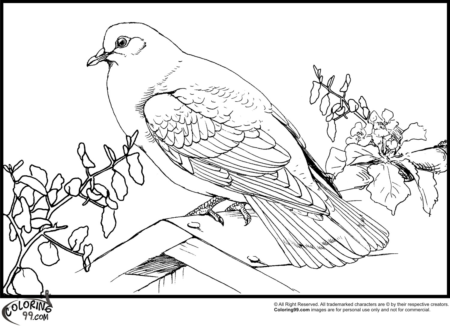 doves coloring pages zentangle dove of peace adults coloring pages printable coloring pages doves