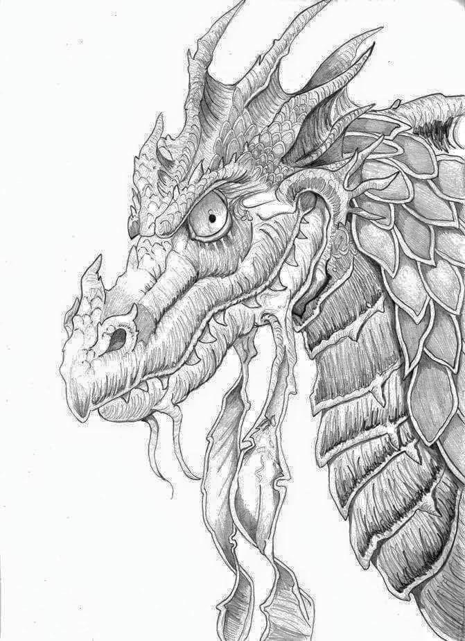 dragon head coloring page realistic dragon drawing at getdrawings free download page dragon head coloring