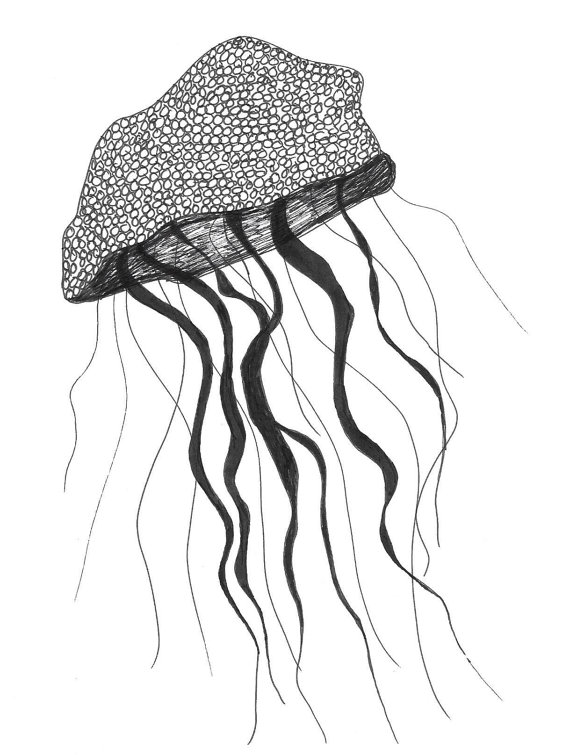 drawing jellyfish jellyfish drawing by movingpicturesx on deviantart jellyfish drawing