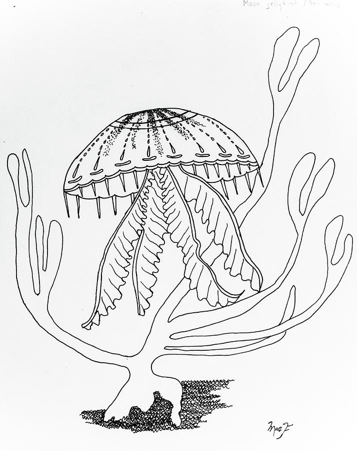 drawing jellyfish title moon jellyfish media copic marker on paper scale jellyfish drawing