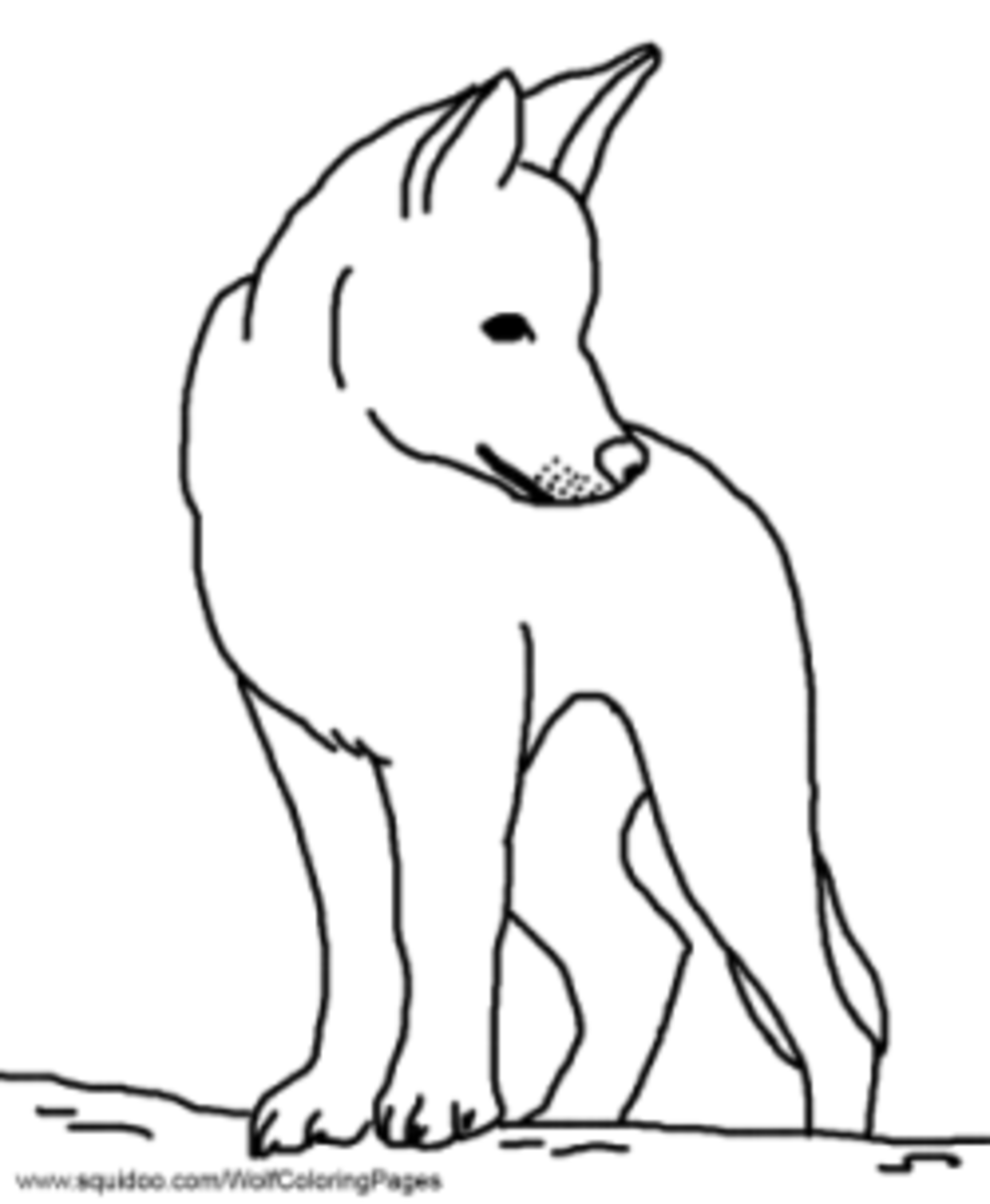drawing of a dingo dingo coloring page drawing of dingo a
