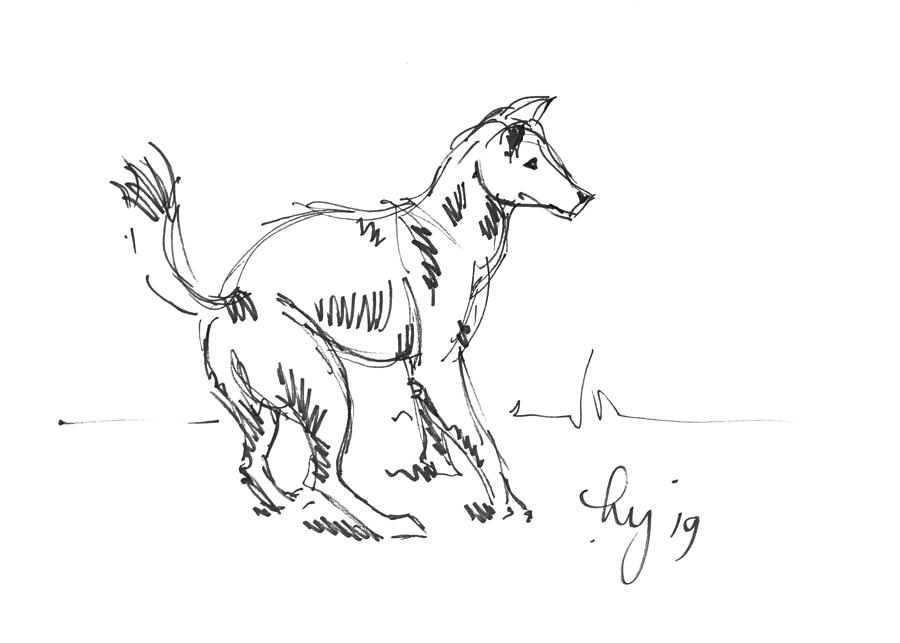 drawing of a dingo dingo drawing by rae hauck drawing dingo a of