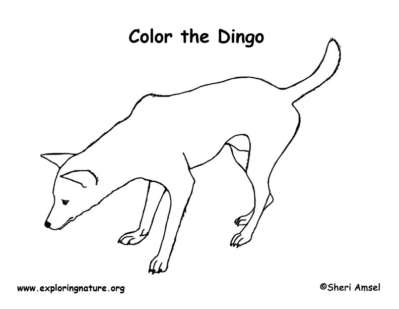 drawing of a dingo dingo silhouette free vector silhouettes of drawing dingo a
