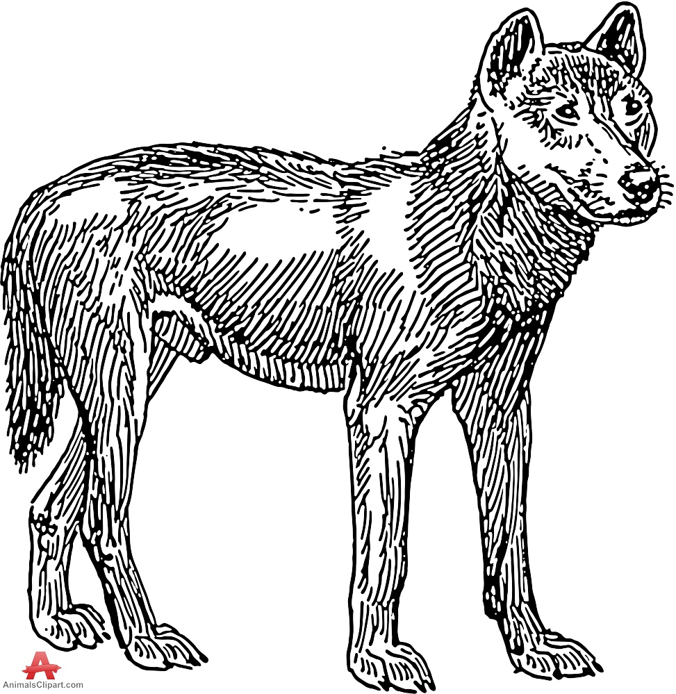 drawing of a dingo filedingo psfpng wikimedia commons dingo drawing a of