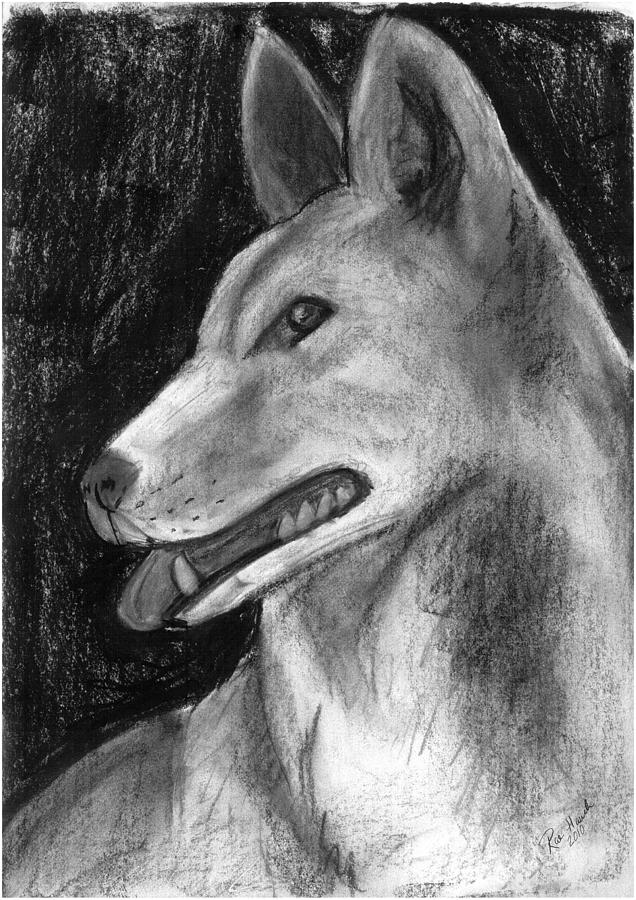 drawing of a dingo learn how to draw a dingo dogs step by step drawing drawing of dingo a