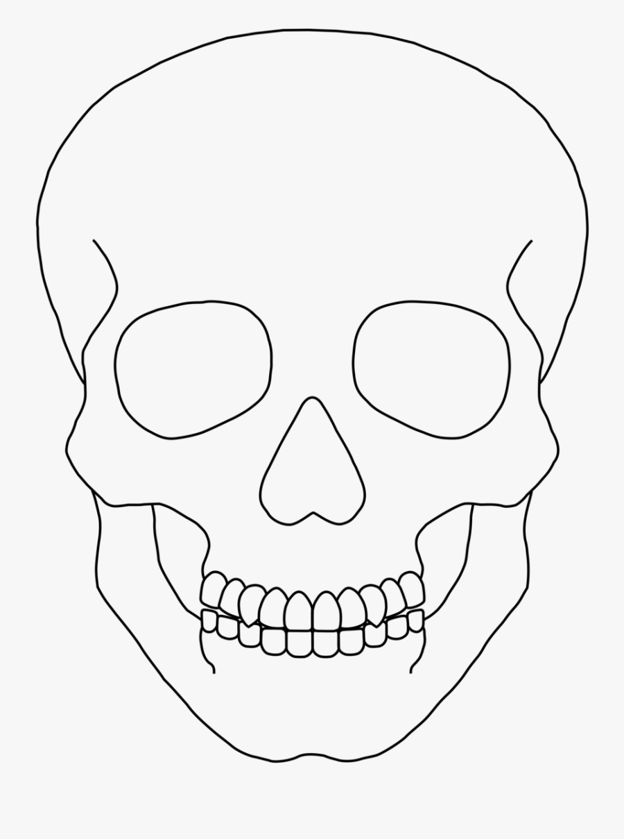 drawing of a human skull 50 best skull reference images on pinterest skull human of skull drawing a