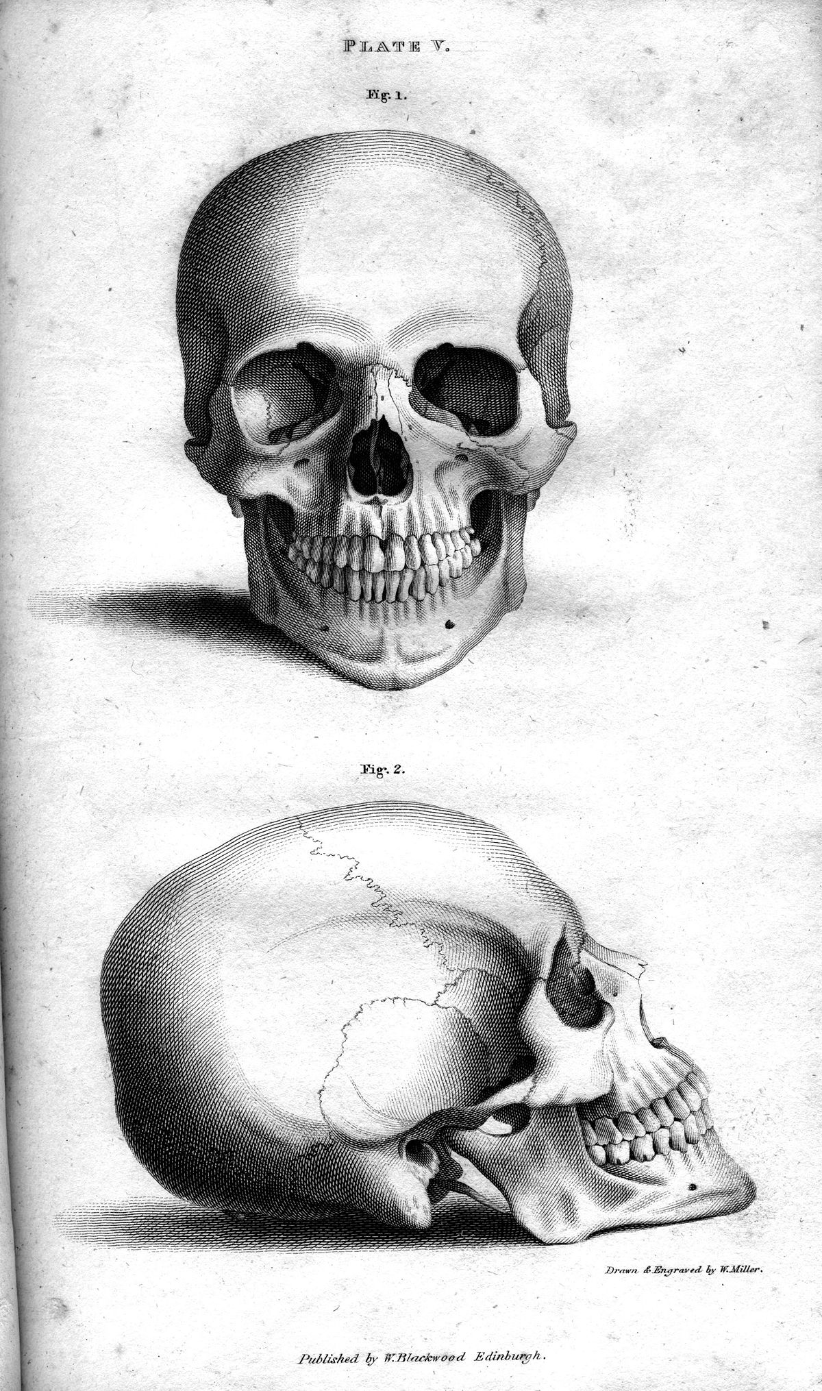 drawing of a human skull fileplate vb human skull engraving by william miller skull of drawing human a