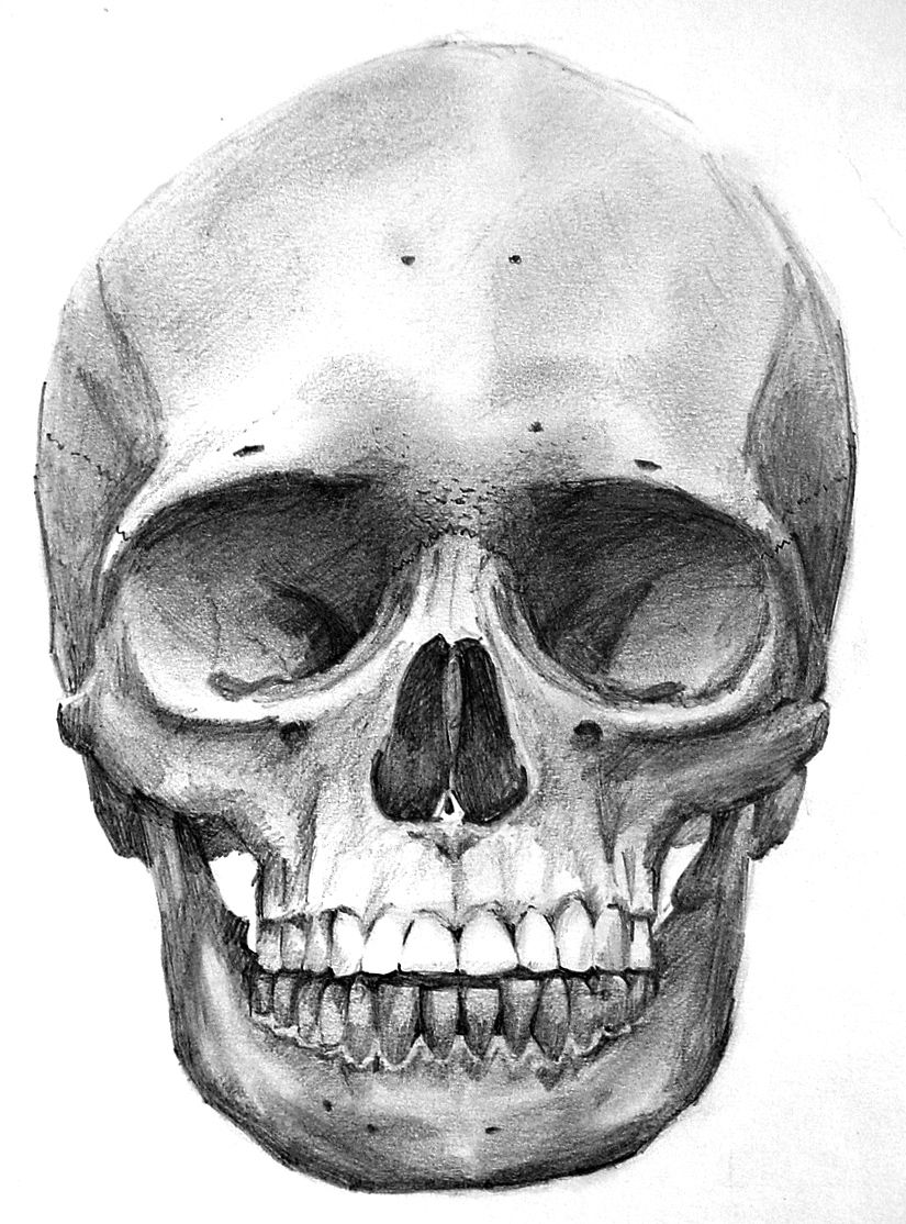 drawing of a human skull front of the skull clipart etc a human of drawing skull
