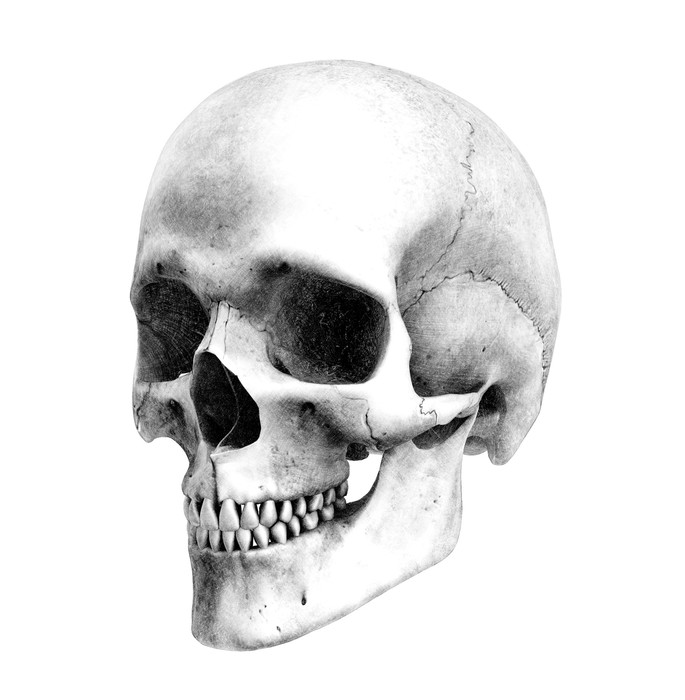drawing of a human skull how to draw a realistic skull human skull step by step skull of a drawing human