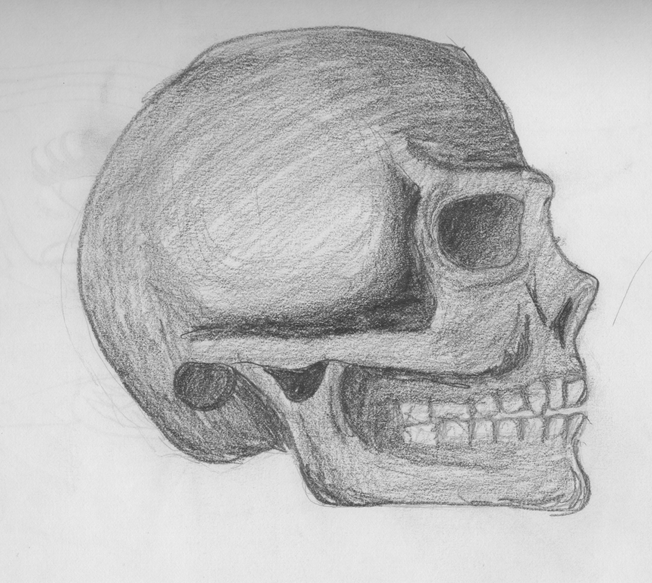 drawing of a human skull side view of human skull by mellissaaf on deviantart a drawing human of skull