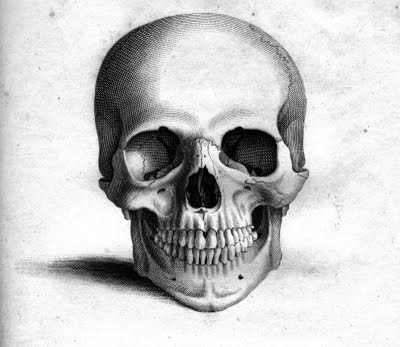 drawing of a human skull simple human face drawing step by step drawing of drawing skull a human