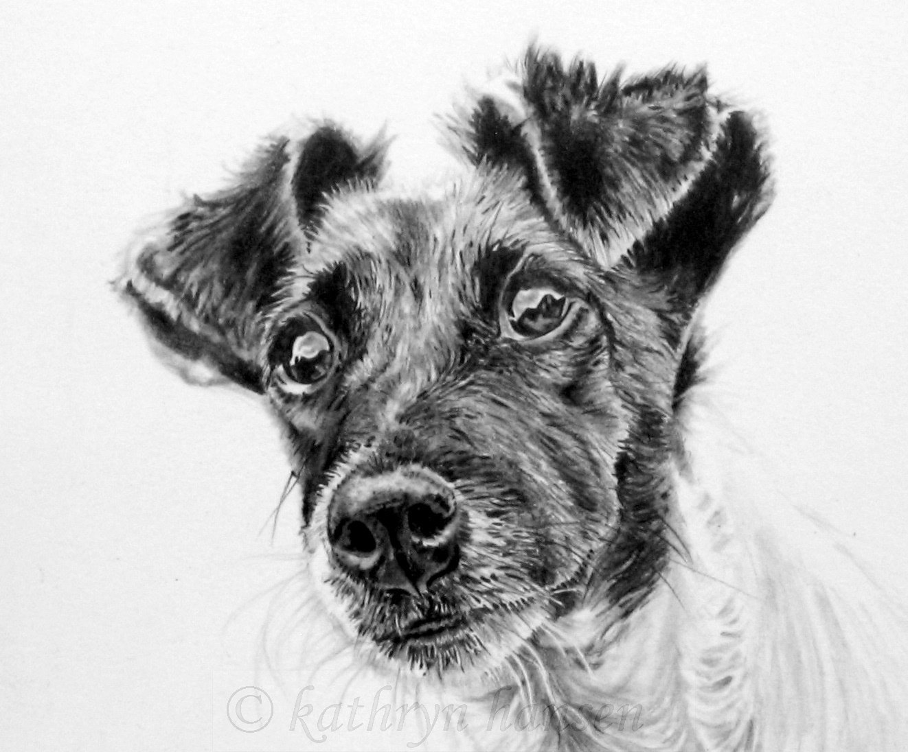 drawings of jack russells 37 best dog sketches images on pinterest drawings russells of drawings jack