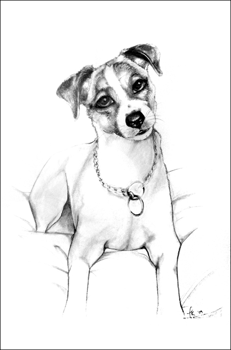 drawings of jack russells 63a2 isaac the jack russell drawspace drawings of russells jack