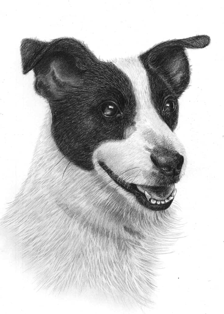 drawings of jack russells jack russell dog pencil by frozenpinky on deviantart of drawings russells jack