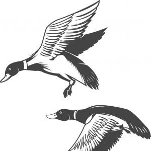 duck drawings duck drawing how to draw a duck easy drawings easy drawings duck