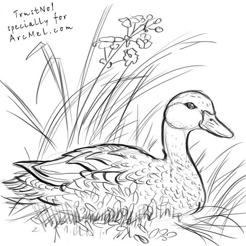 duck drawings duck drawing how to draw a duck easy drawings easy duck drawings