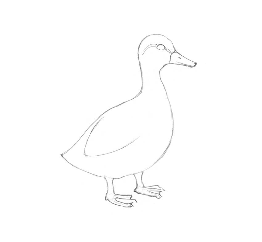 duck drawings duck in a pond drawing at getdrawings free download drawings duck