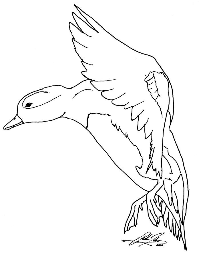 duck drawings flying duck drawing free download on clipartmag duck drawings