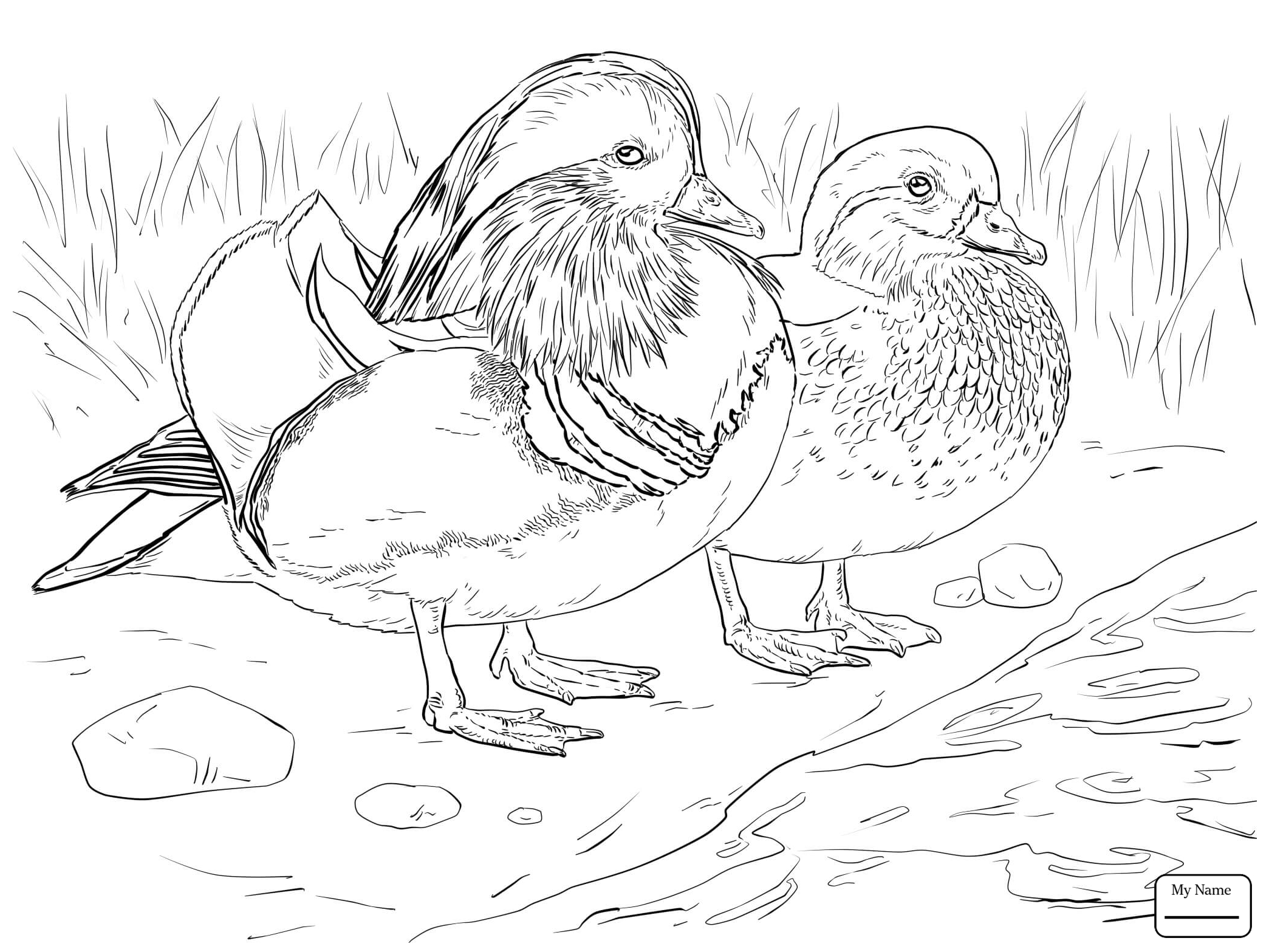 duck drawings flying duck drawing free download on clipartmag duck drawings 1 1