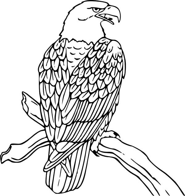 eagle coloring book bald eagle is hungry coloring page netart coloring eagle book