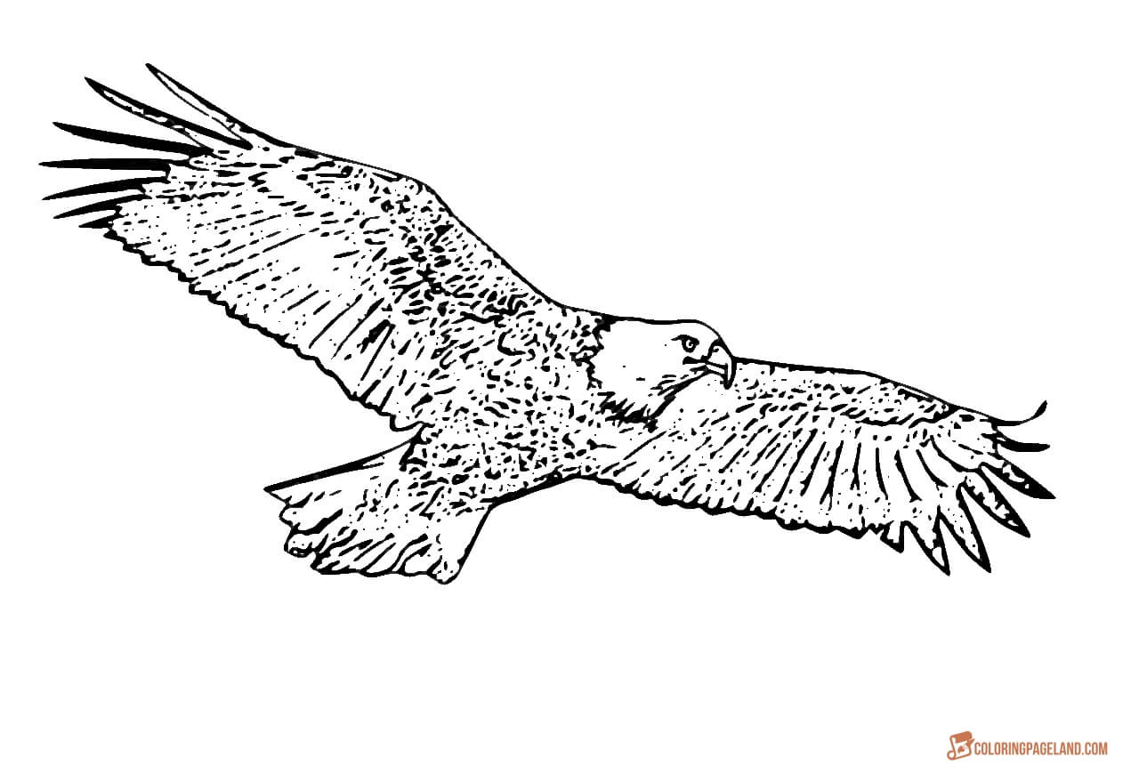 eagle coloring book eagle coloring pages free printable black and white pictures eagle coloring book