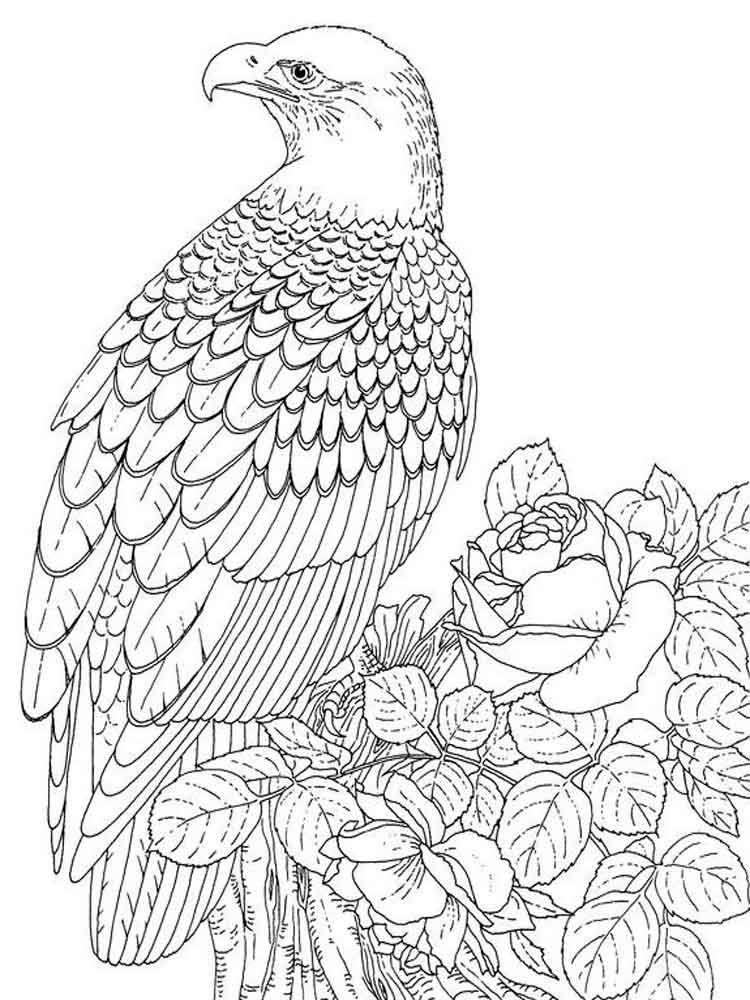 eagle coloring download wedge tailed eagle coloring for free coloring eagle