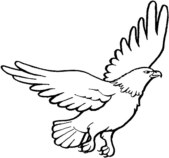 eagle coloring eagle drawing color free download on clipartmag coloring eagle