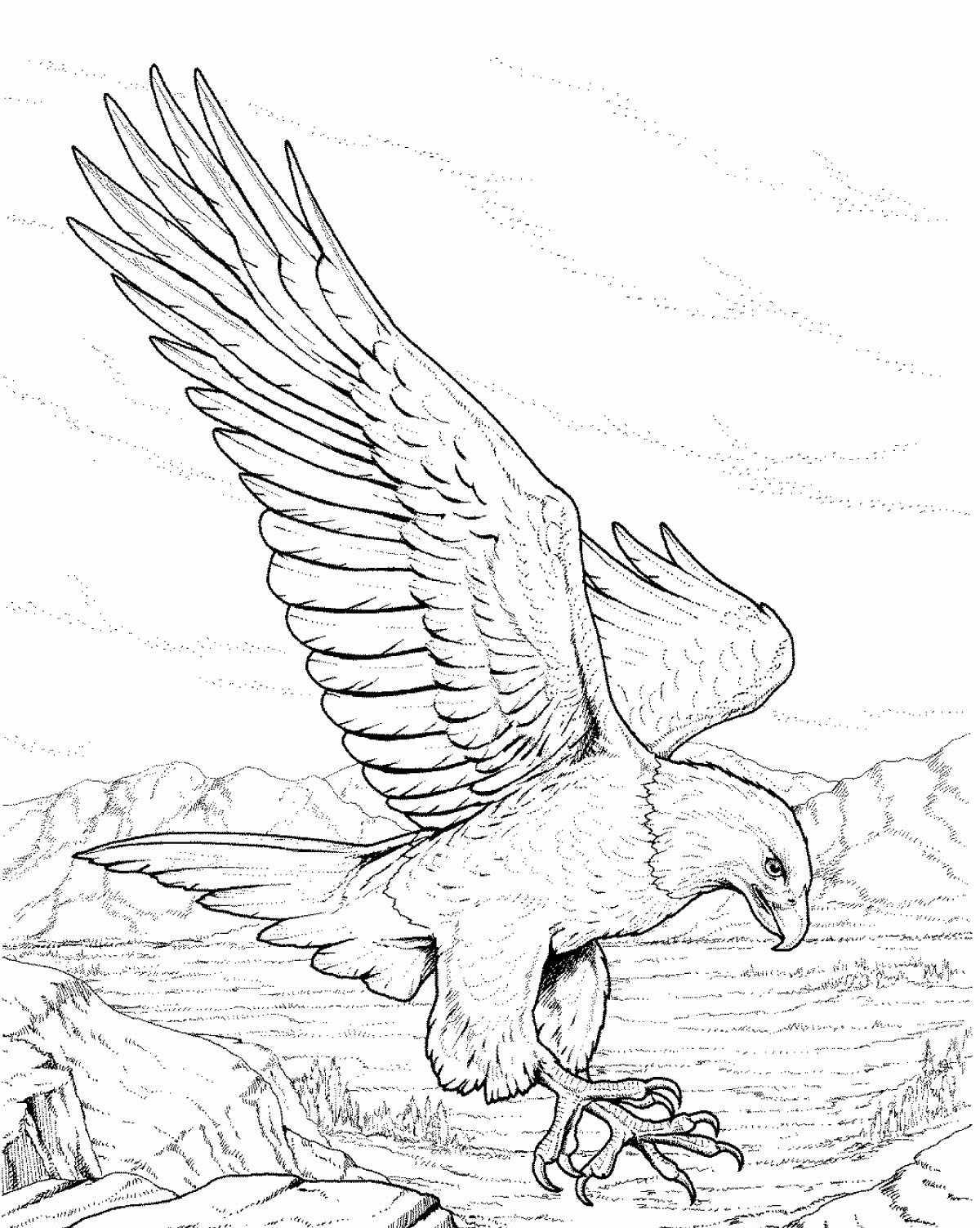 eagle coloring flying eagle coloring page at getcoloringscom free eagle coloring