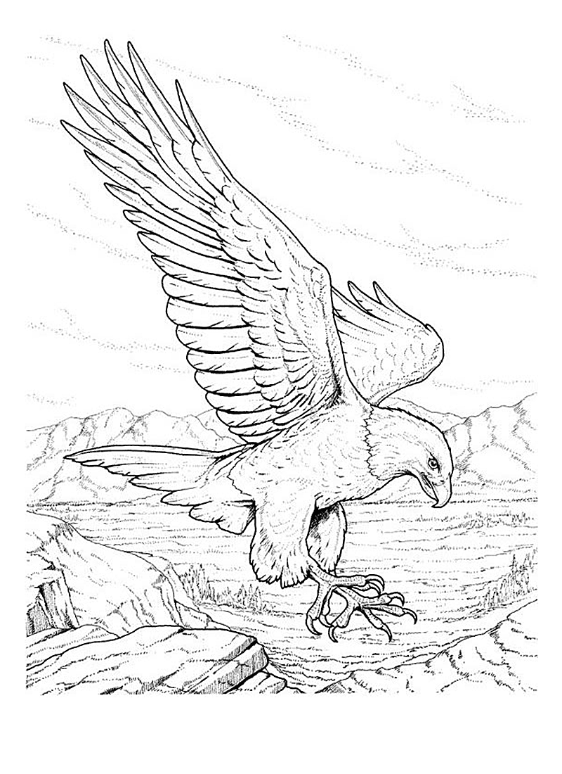 eagle coloring free printable bald eagle coloring pages for kids eagle coloring 1 1