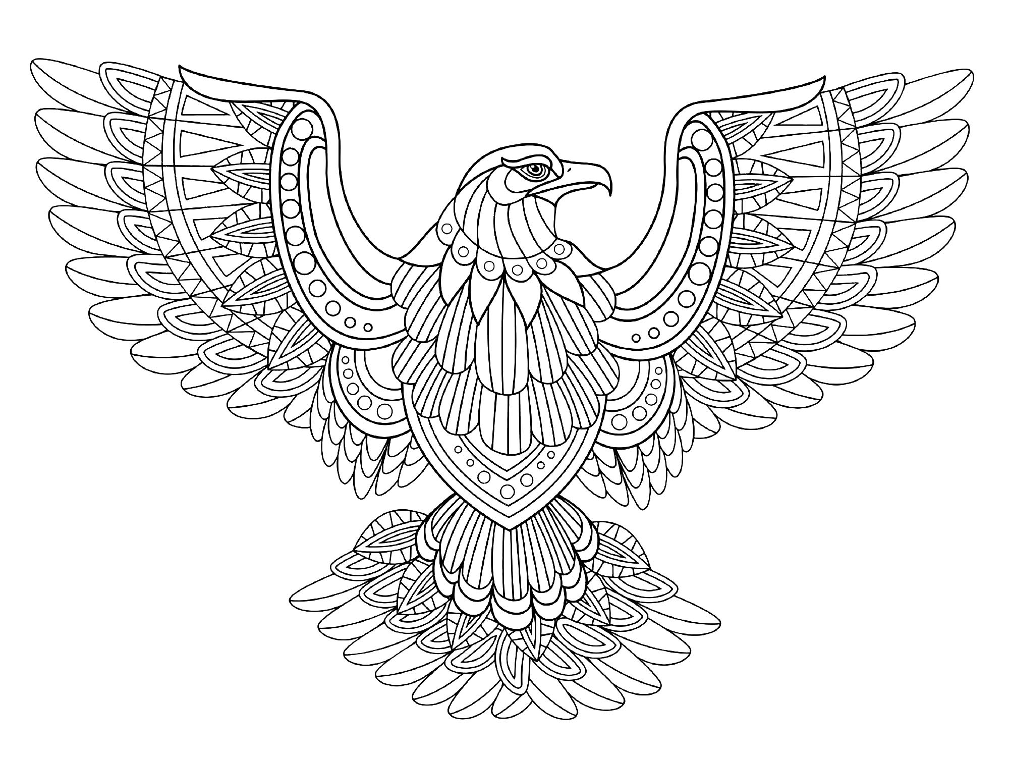 eagle coloring pages bald eagle zentangle page adult hard advanced coloring coloring eagle pages