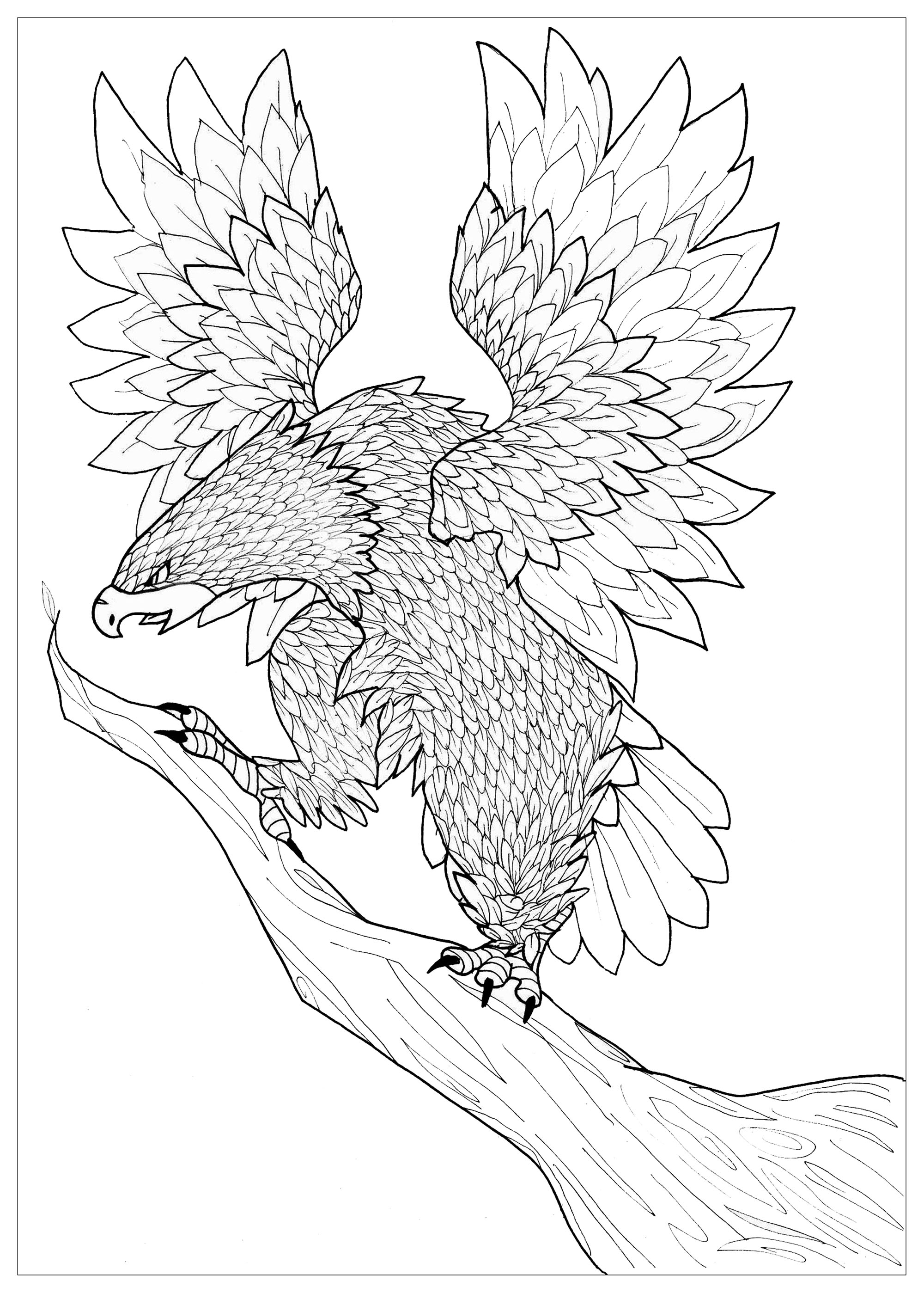 eagle coloring pages flying eagle birds adult coloring pages coloring eagle pages