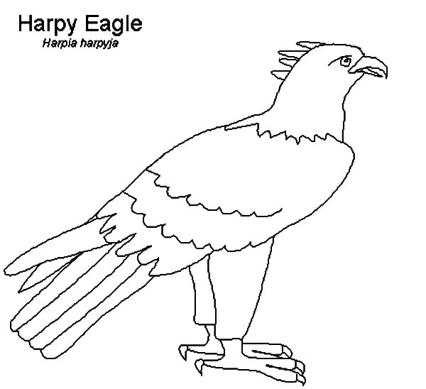 eagle coloring printable bald eagle coloring pages for kids cool2bkids coloring eagle