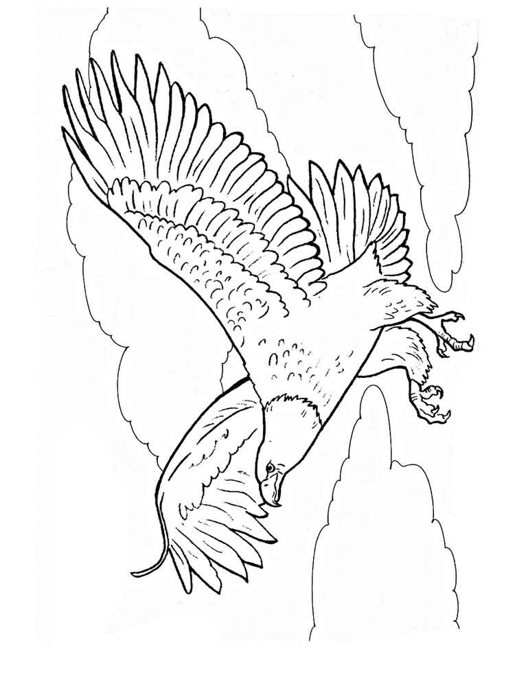 eagle coloring printable pictures of bald eagles full naked bodies eagle coloring