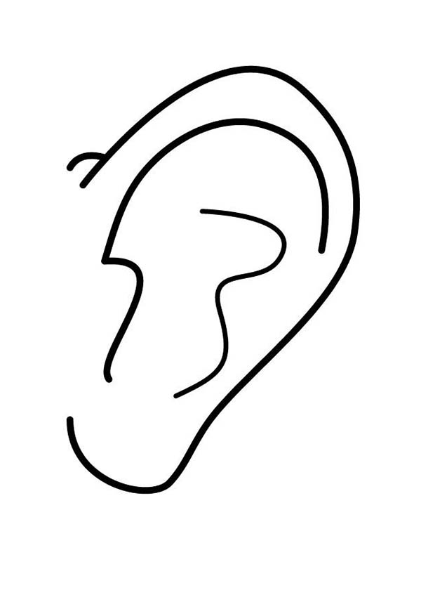 ear pictures to color ear pictures for kids clipart best pictures color to ear