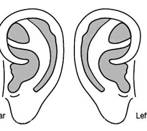 ear pictures to color my listening ears activity can go with howard b ear pictures to color