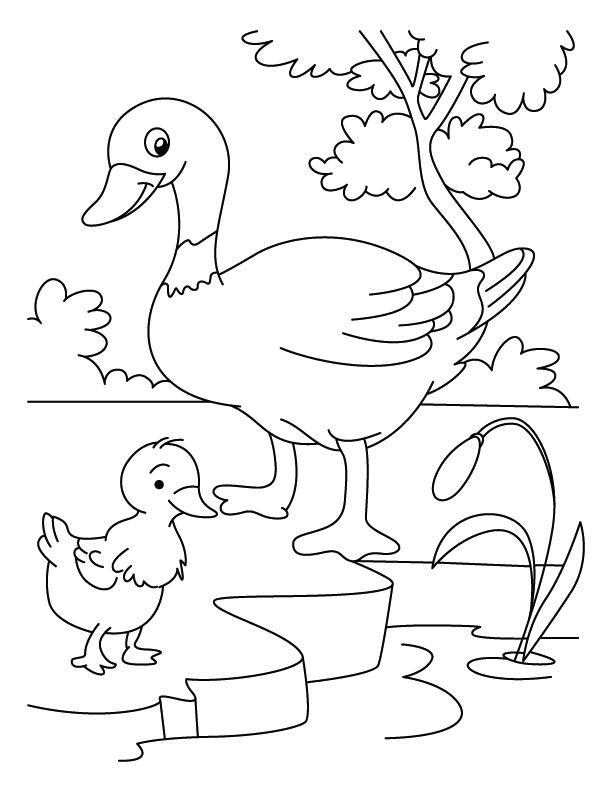 easy duck coloring pages draw samples duckling coloring page easy drawing duck pages coloring easy