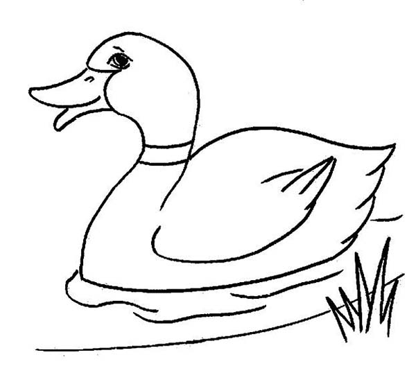 easy duck coloring pages duck coloring page super simple duck pages easy coloring