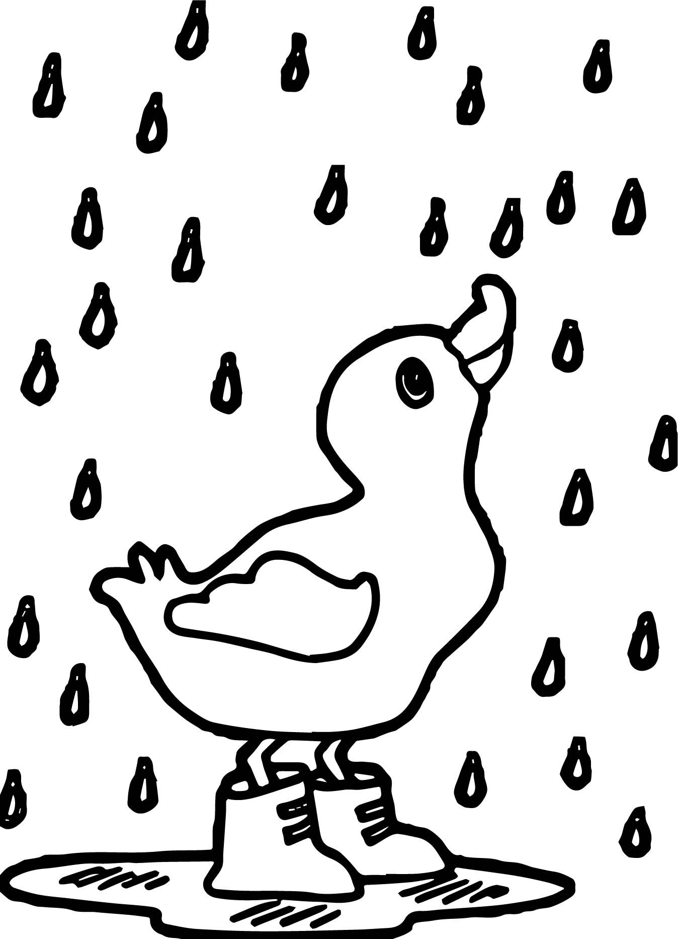 easy duck coloring pages five little ducks coloring pages super simple duck easy pages coloring