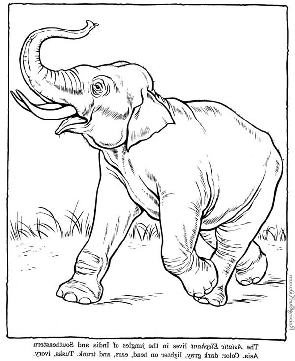 elephant coloring african elephant coloring pages coloring sky coloring elephant