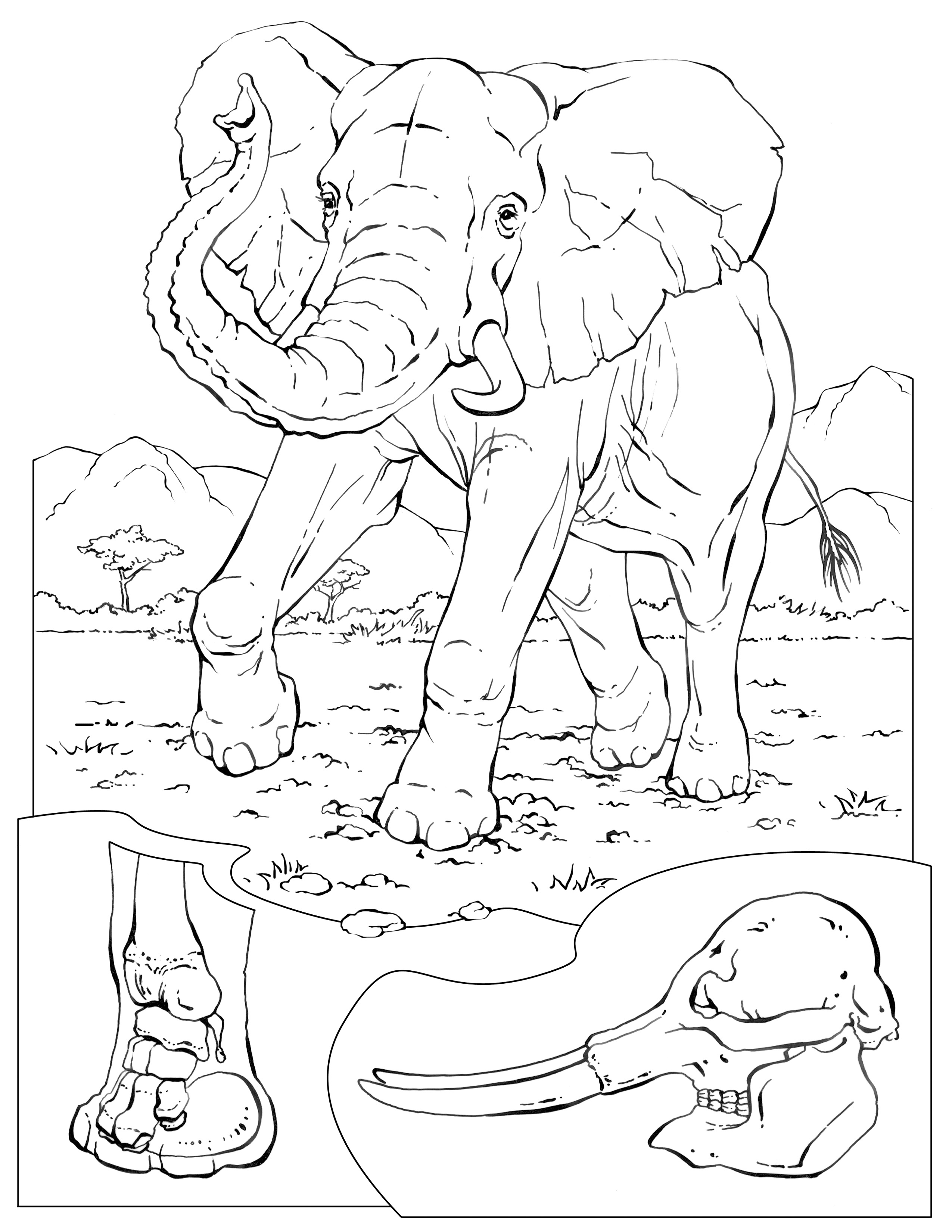 elephant coloring coloring book for children elephants stock illustration elephant coloring